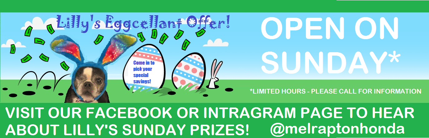 Lilly's Eggcellant Offer