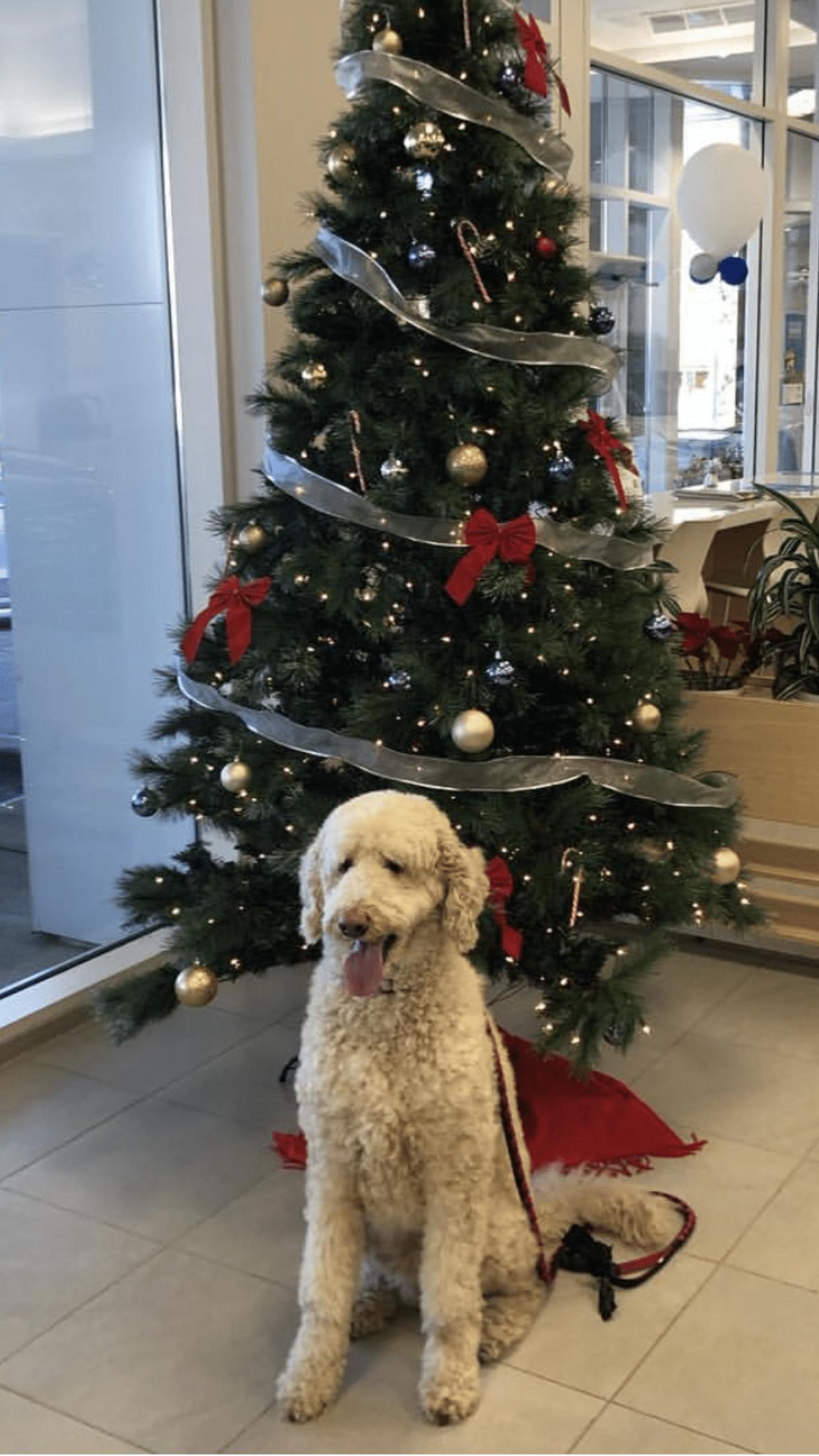 Dogs in car showroom Toronto GTA