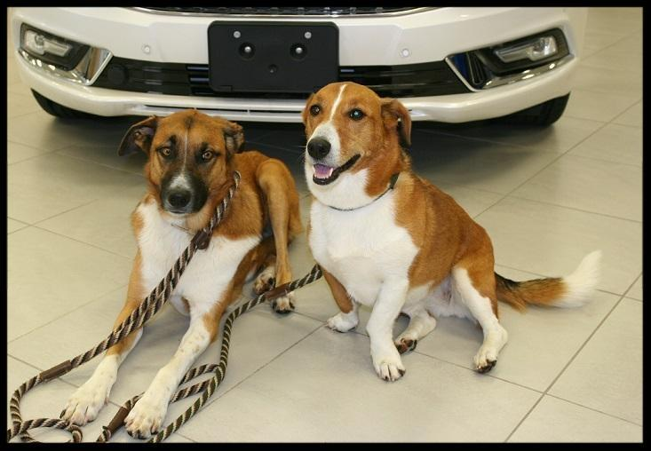 Toronto GTA Ford Lincoln dealer dogs in the showroom