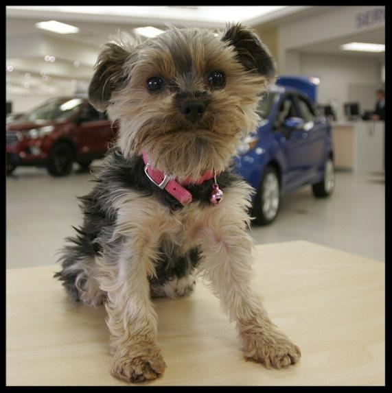 Dog friendly dealership in Aurora York Region