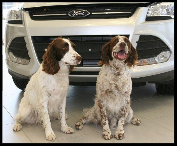 Dog of the week McAlpine Ford GTA Ford dealer