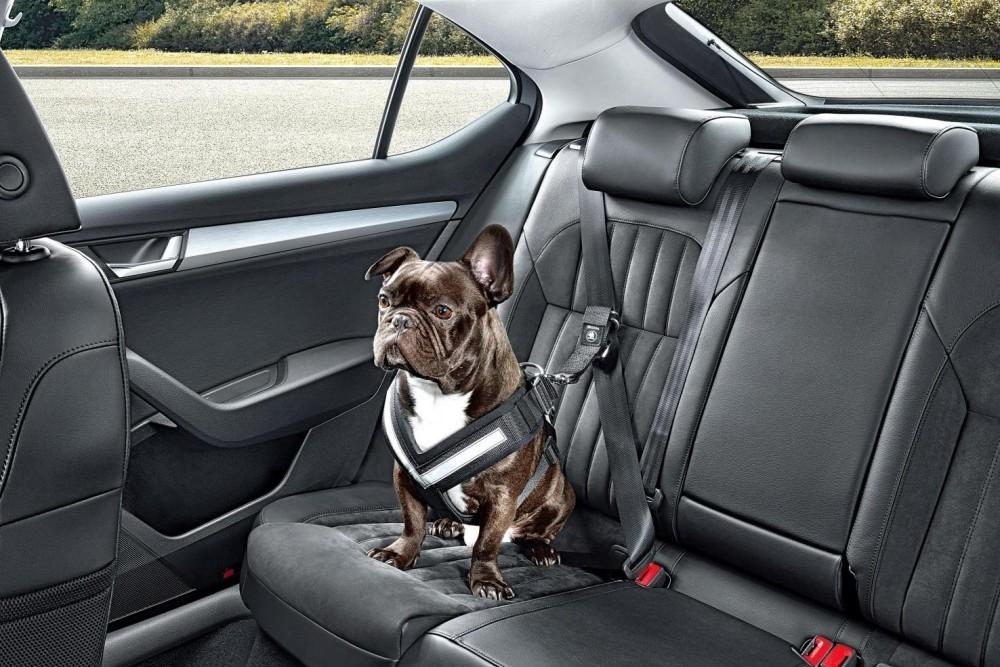 Drive Safely With Pooches And Other Pets